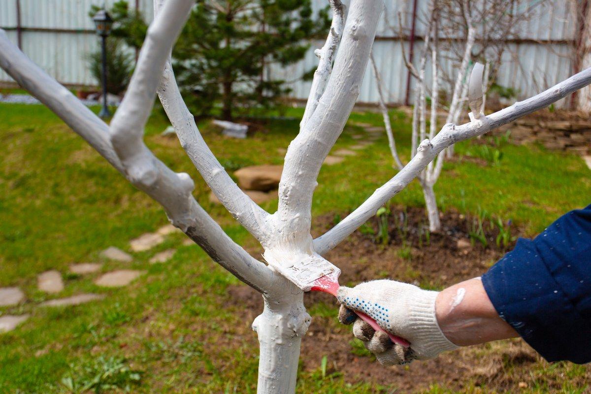 Садовая акриловая краска для деревьев